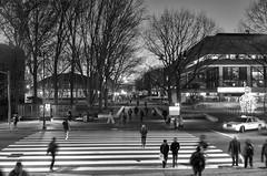77 Massachusetts Av. | MIT (Ayush Bhandari) Tags: leica trees cambridge people blackandwhite usa students boston ma education university crossing mit postcard zebra summilux m9 02139 massachusettsinstituteoftechnology