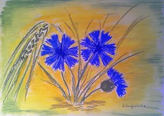 Cornflowers (Dudyshkina Ekaterina) Tags: flowers blue flower art beautiful beauty yellow painting picture painter beautifull cornflowers pastelle