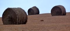 Visit to Kansas (Kuby!) Tags: panorama rural nikon december d70 kansas hay bales 2008 eastern kubitschek