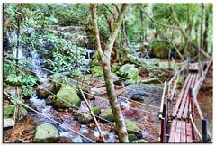 The Chosen Path (fotografdude) Tags: bridge green water dark thailand waterfall suspension path sony running jungle narrow rx100 fotografdude