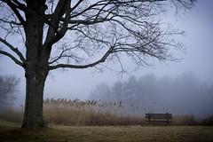 _DSC9935 (Troy B Thompson) Tags: park winter usa lake water fog bench dawn pond unitedstates swamp marsh cattail