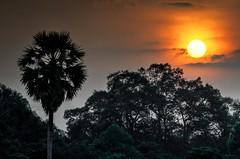 Sunset from Angkor Wat, Cambodia (Sait Izmit) Tags: travel sunset cambodia angkorwat nikond7000