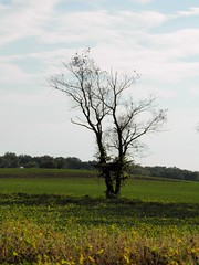 (jordanmclain) Tags: summer color tree green fall grass photography focus alone lonely minimalsim