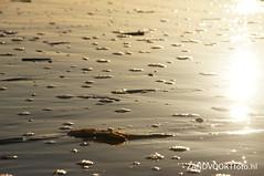 DSC08521 (ZANDVOORTfoto.nl) Tags: sunset sea sun mer beach seagull shell noordzee seashell zon zandvoort schelpen eb watertoren northsee ondergaande vloed wunset scheermesjes scheermessen zandvoortfotonl zandvoortfoto zandvoortphoto