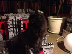 morghul kittens on rampage (lord_tarris) Tags: cat lego kitty stefan kitties katze ktzchen kubin lordtarris