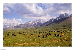 dp2m-240 (Gianni Espresso) Tags: kazakhstan aksuzhabaglynaturereserve