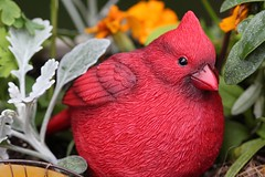 Ceramic Cardinal in Flower Box (hbickel) Tags: red macro bird ceramic cardinal