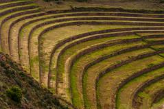 Terrasses Pisac (faltimiras) Tags: peru inca ruins cusco valle inka salinas ruinas valley sagrada moray pisac maras incas inkas ruines ollantaytambo vall salines urumbamba inques
