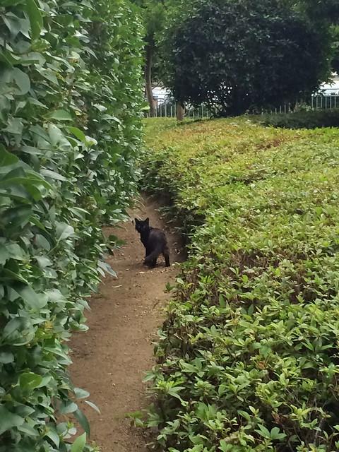 Today's Cat@2014-06-24