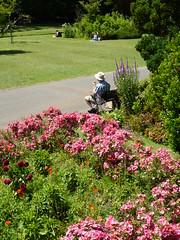 summer town 176/365 (dawn.v) Tags: uk flowers summer england june gardens bench town path dorset summertime bournemouth summertown asunnyday 365days 365daysproject bournemouthgardens lumixtz25 365daysin2014