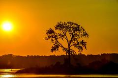Golden sunrise..... (tomk630) Tags: nature sunrise tree golden light water potomac usa