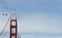 FOG GOLDEN GATE (DROSAN DEM) Tags: golden gate san francisco usa bird ave niebla fog nubes sky cielo pelicanos compositio composition composicion