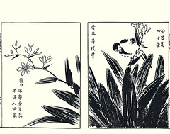 Blackberry-lily and great tit by Toetsu Hasegawa (active late 1400s) (Japanese Flower and Bird Art) Tags: flower blackberrylily belamcanda chinensis iridaceae bird great tit parus major paridae toestu hasegawa kano settei tsukioka woodblock picture book japan japanese art readercollection