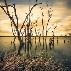 Fallen II (David Dahlenburg) Tags: southaustralia sa lake bonny lakebonny dahlenburg trees deadtree deadtrees wwwdaviddahlenburgcom australia landscape longexposure