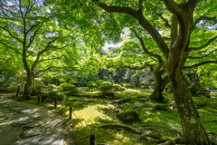 The Garden (Pikaglace) Tags: sony a7 higashiyama japan japon kyoto asie asia travel photography green ombre shade garden jardin japanese trees mousse moss chemin path beautiful art