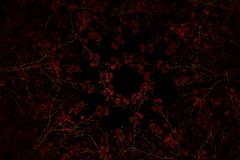 Kieppi_5092 (jukkalaine) Tags: light painting valomaalaus valopaja autumn syksy leaves circle