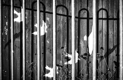 Fence Flyby (Fourteenfoottiger) Tags: fence hff fencefriday shadows plants birds abstract texture posts