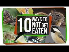 10 Bizarre Ways to Avoid Being Dinner? (Download Youtube Videos Online) Tags: 10 bizarre ways avoid being dinner