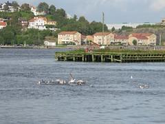 Gteborgs hamn _ Gothenburg harbour (2011) (biketommy999) Tags: 2011 gteborg gtalv vstkusten lv river