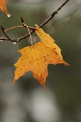 011 (historygradguy (jobhunting)) Tags: stillwater ny newyork upstate saratoganationalhistoricalpark leaf leaves autumn fall fallcolors