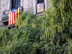 independent catalonia? (kexi) Tags: barcelona catalonia spain europe inependent flags 2 two pair green greenery samsung wb690 september 2015 balcony instantfave