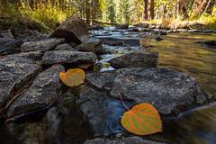 Parker Creek Color (EMaryannHazel) Tags: parkercreek fall sierras eastern sierra creek