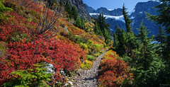 Fall colors along the trail to the Lower Curtis Glacier (keithc1234) Tags: fallcolors northcascadesnationalpark northcascades mountshuksan glacier lowercurtisglacier hiking trail