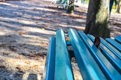 Le banc bleu (GreenEyes Photography) Tags: rennes greeneyesphotography bird oiseau batiment city ville vilaine eau water banc bleu couleur noir et blanc sepia love couple story