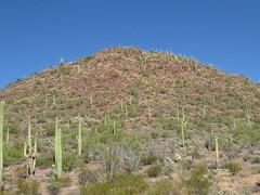 Landscape (SpeedyJR) Tags: 2016janicerodriguez saguaronationalpark landscape nature tucsonarizona arizona speedyjr