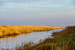 C2N_3706 (Clark Engbrecht) Tags: bartoncounty cheyennebottoms kansas nature wetlands wildlife