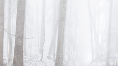 diffuse in white (gregor H) Tags: raggal vorarlberg sterreich at bw forest mist cold winter bright lines vertical wild snow trees panoramic panorama snowy blackandwhite landscape mood highkey free light effect weather fairytale fantasy wood misty magical
