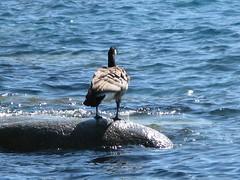 Lake Tahoe NEVADA 047 (listerdouglas) Tags: sandharbor nevadastatepark laketahoe