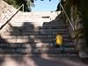 Les marches de la gloire (Dahrth) Tags: gf1 gf120 panasoniclumixgf1 lumixmicroquatretiers lumixμ43 micro43 microfourthirds raw bébé baby escaliers stairs everest