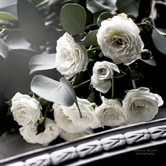 (Rebecca Watson Photography) Tags: white roses whiteroses flowers stilllife