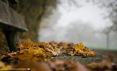 On a cold autumn morning. (andreasheinrich) Tags: nature leaves bench autumn october morning fog moody cold germany badenwürttemberg neckarsulm dahenfeld deutschland natur blätter bank herbst morgen nebel düster kalt nikond7000