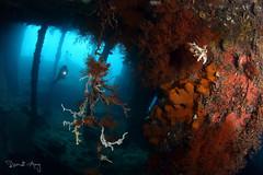 Wreck (Randi Ang) Tags: usatliberty libertywreck liberty ship wreck shipwreck wreckdive tulamben bali indonesia underwater scuba diving dive photography wide angle randi ang canon eos 6d fisheye 15mm randiang