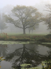 Roots and Reflections (chantsign) Tags: reflection water misty fog morning trees branches limbs green mossy
