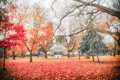 Late Fall at Allan Gardens (A Great Capture) Tags: ig agreatcapture agc wwwagreatcapturecom adjm ash2276 ashleylduffus ald mobilejay jamesmitchell toronto on ontario canada canadian photographer northamerica fall autumn automne herbst 2016 torontoexplore latefall late leaves fallen allangardens greenhouse downtown city urban trees nature