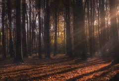 Light and shadows (jamietaylor2127) Tags: wood trees light shadows sun rays leaves autumn ngc
