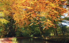 Golden Canopy (Martyn.Smith.) Tags: trees autumn waterway canal forest woods tree fallcolor canon eos 700d sigma lens flickr image photo sunlight autumnal landscape wales monbreconcanal southwales