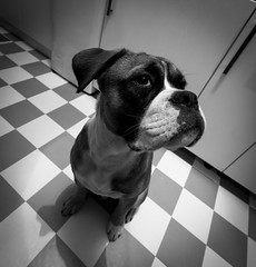 Buddy @ 10mm II (Lens a Lot) Tags: paris | 2016 canon efs 1018mm f4556 is stm ultra wide angle dog pet black white