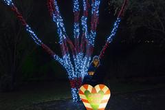 Candy Cane Christmas - Luminaria (aaronrhawkins) Tags: luminaria candycane tree thanksgivingpoint lehi utah family christmas night pose lights stripes trees aaronhawkins