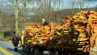 transporting tobacco