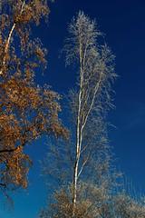 IMG_0846_DxO Frost (Wallus2010) Tags: frost raureif eis winter sonnenschein himmel blue sky canon polfilter polarizer eos550d sigma 18250 polarizing frozen