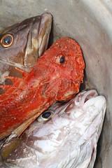 Nature morte - poissons du golfe de Guinee (Dlirante bestiole [la posie des goupils]) Tags: togo golfedeguine westafrica fishing ocean fish redfish rascasse