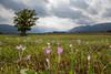 Murnau, Bavaria (Chris Nature) Tags: landschaft nature naturfotographie himmel berge alpen deutschland bayern baum gebirge moos moor eiche crocus herbst herbstzeitlose colchicum autumnale