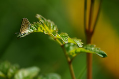 A small dreamy world (Salwan Binni) Tags: butterfly nature dof leaves sunshine dreamyworld sonycamera macrophotography insect