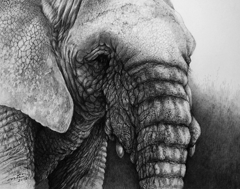 The World's Best Photos Of Elephant And Realistic