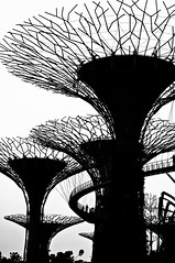 The Garden (Andi_aiuto) Tags: silhouette marina garden 50mm bay singapore f14 structure sands d90