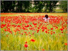 Me alegro de veros!! (RosanaCalvo) Tags: espaa flores primavera persona europa guadalajara campo rosana junio castillalamancha amapolas trillo campodeamapolas